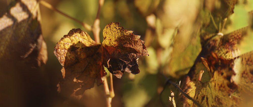 vinos de otoño