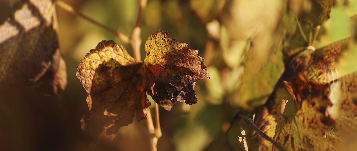 Los mejores vinos para el otoño